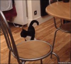 Komische Katze