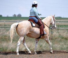sabino horses - Google Search