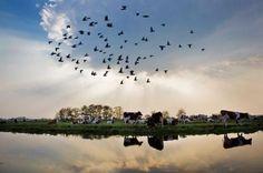 Racing Pigeons | I love Belgium