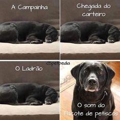 AQUI É ASSIM!❤❤ #petmeupet #cachorro #filhode4patas #amogato #feriado #cachorroétudodebom #petisco