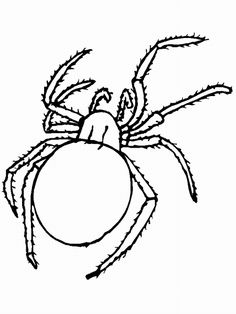 insect coloring pages 503670 - Black Widow Spider Coloring Pages