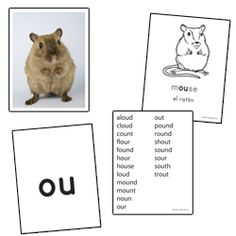 Phonics Skill Cards - Vowel Digraphs & Diphthongs Word Study, Word Work, Vocabulary List, Spanish Vocabulary, Phonics Cards, Vowel Digraphs, Blends And Digraphs, Reading Stations, Education And Literacy