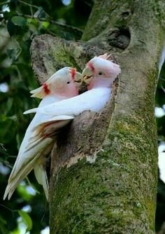 Amor, amor y + amor