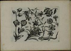 Viridarium Novum i | by peacay