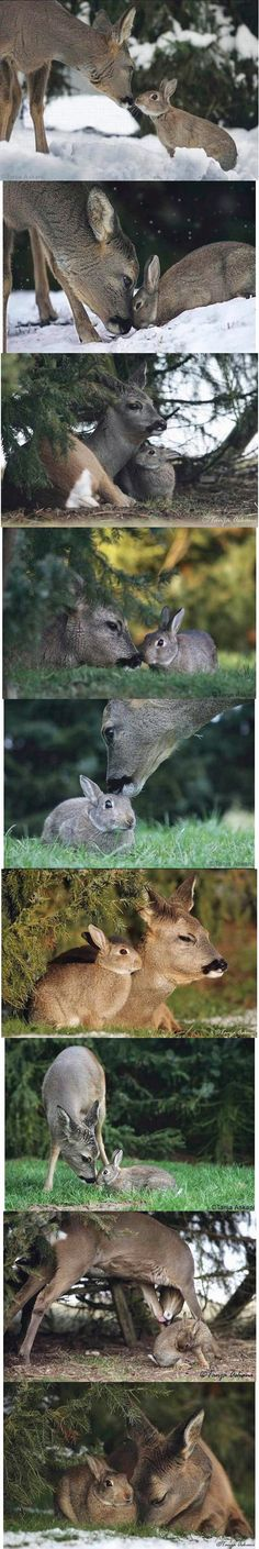Bambi and Thumper are real!