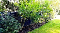 Custom Horizontal Black Wrought Iron Fencing Wrought Iron Fences, Fencing, Sidewalk, Plants, Black, Picket Fences, Black People, Sidewalks, Plant