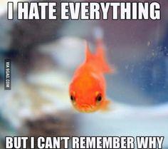 Say hello to Grumpy Fish