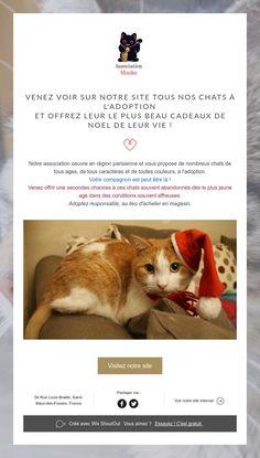 Venez voir sur notre site tous nos chats à l'adoption  et offrez leur le plus beau cadeaux de noEl de leur vie !