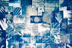 photogram and cyanotype
