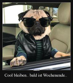 Cool bleiben.. bald ist Wochenende.. | Lustige Bilder, Sprüche, Witze, echt lustig