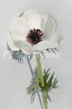 Single Artificial Fresh Touch Blue Anemone, Silk Blue Poppy Single Artificial Fresh Touch Blue Anemone, Silk Blue Poppy [Blue Real Touch Anemone] - £6.99 : Silk Wedding Flowers, by Silk Blooms, Glasgow
