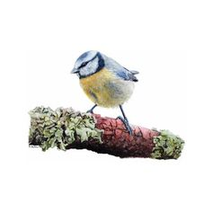 Bird Print BLUE TIT Watercolour Limited Edition Print, a Quality... ($21) ❤ liked on Polyvore featuring home, home decor, wall art, water color painting, blue painting, photo wall art, blue bird painting and water colour painting
