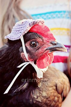 chicken hat! I would never crochet this, but I can't stop laughing imagining my hens in these
