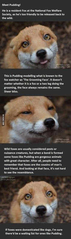 Foxes are cool.
