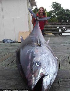 Big fish: Donna Pascoe, 56, hooked the 411.6kg (64 stone) Pacific bluefin tuna near the Three Kings Islands off Cape Reinga of New Zealand