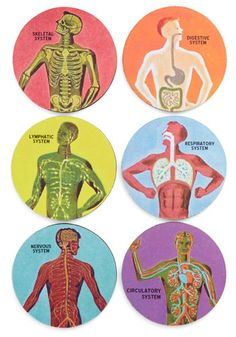 Pour Anatomy a Drink Coaster Set | Mod Retro Vintage Kitchen | ModCloth.com