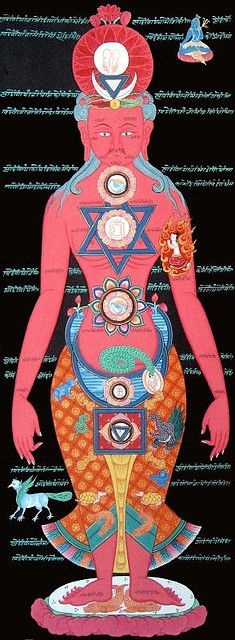 Muladhara - Base or Root-Chakra (last bone in spinal cord)  Swadhisthana - Sacral-Chakra (ovaries / prostate)  Manipura - Solar Plexus-Chakra (navel area)  Anahata - Heart Chakra (Heart-area)  Vishuddha - Throat Chakra (throat and neck-area)  Ajna - Brow or Third Eye Chakra (pineal gland or third eye)  Sahasrara - Crown Chakra (Top of the head; 'Soft spot' of a newborn)