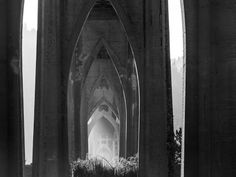 Under the St. Johns Bridge, Cathedral Park, Portland, OR. Photo by Pat Snyder