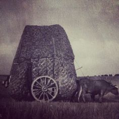 HAULING STRAW AFTER THRESHING CEREAL