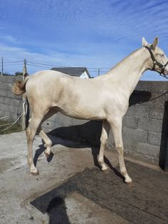 Potra pre Horses, Cats, Animals, Horses For Sale, Pictures Of Horses, Equestrian, Gatos, Animales, Animaux