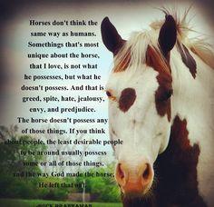 Horses don't feel greed, spite, hate jealousy, or envy.