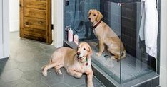 Dog showers are the latest home trend — and they're surprisingly practical I love this one, especially the glass door that swings. I have used white porcelain tile that looks like marble in my dog shower but did not do doors. White Porcelain Tile, Dog Washing Station, Dog Rooms, Dog Shower, Home Trends, Dog Houses, Dog Life, Your Dog, House
