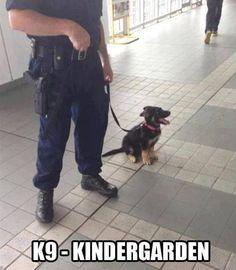 K9 - Kindergarten  AWWWWW