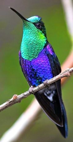 Exotic Hummingbird 💕 So Colorfully Beautiful Kinds Of Birds, All Birds, Little Birds, Angry Birds, Pretty Birds, Beautiful Birds, Animals Beautiful, Wonderful Flowers, Beautiful Life