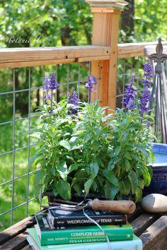 Botanic Bleu: Benefits of Native Plant Gardening