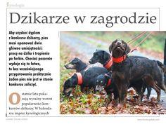 """Konkursy dzikarzy to znakomita okazja, by na samodzielnie ocenić pracę przyszłego reproduktora bądź rodziców psa, który będzie towarzyszem naszej łowieckiej przygody. We wrześniowym wydaniu """"Łowca Polskiego"""" publikujemy artykuł o dzikarzach i organizowanych dla nich konkursach pracy.  Zapraszamy do lektury!"""