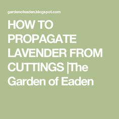 HOW TO PROPAGATE LAVENDER FROM CUTTINGS  The Garden of Eaden