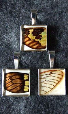 Melissa Senetar - The Cicada Collection
