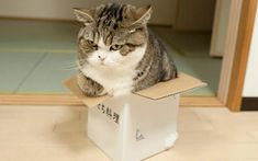 It's about time we got to the bottom of why cats love cardboard boxes so much