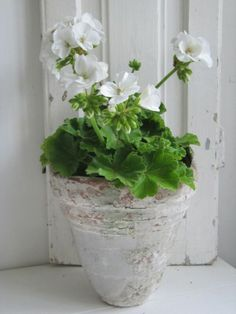 lovely pot with a nice geranium in it!