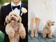Reportaje de boda con tu perro