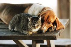 Love thy neighbor...