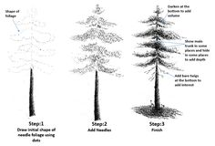 How to Draw Needle Foliage in Pen and Ink | My Pen and Ink Drawings