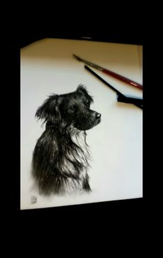 Carboncino