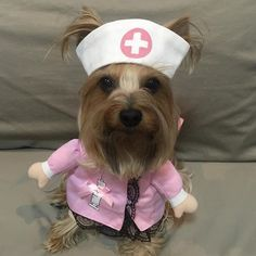 Mommy said she really need nurse care, so I am waiting for mommy to come back home. #yorkies #yorkshire #yorkielove #yorkieslee #yorkiesofinstagram #yorkshireterrier #dog#pet#dogcosplay #dogcostume #petcostume #dogthailand #petdaily #petthailand #happydog#cosplay #racing #doggy #หมา#ยอร์คเชียร์เทอร์เรีย #ชุดหมา #หมาน่ารัก #หมาคอสเพล#nurse #