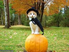 funny witch pictures | Im A Witch - funnycatsite.com
