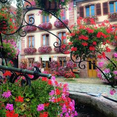 Bergheim, Alsace, France A floral scene in Alsace, a region with a mix of French and Germanic influences.