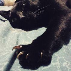 Pensando... Y me despiertas para una foto?  #gatitolindo #mundogatuno #ilovemycat #kitty #lovecats #cat #catsoninstagram #cats_of_instagram #catoftheday #catstagram #blackcat #blackbabies #picoftheday #photooftheday #bestfriends #adorable #amigo