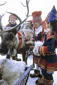 Sami children caring for one of their reindeer