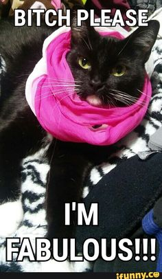 Awesome! :) #cats #memes