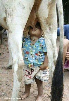 Milk ... direct supply!