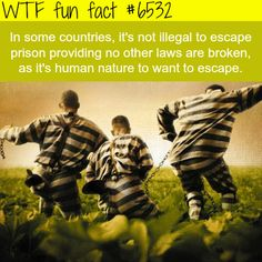 Escaping prison in not illegal in some countries - WTF fun facts