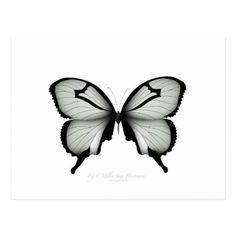 Valley Sage Huntsman Butterfly Postcard - nursery ideas gift present idea diy individual customized