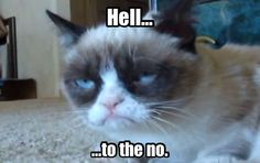 Grumpy Cat- posted by Candice Marie Grumpy Cat Quotes, Funny Grumpy Cat Memes, Funny Animal Memes, Funny Cats, Funny Animals, Cute Animals, Grumpy Kitty, Crazy Cat Lady, Crazy Cats