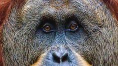 Primates, Climate Action, Plant Species, Endangered Species, Habitats, Wildlife, Gallery, Facts, Animals