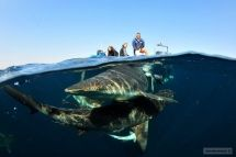Aliwal Dive Centre and Lodge - Scuba Diving in Umkomaas, South Africa…